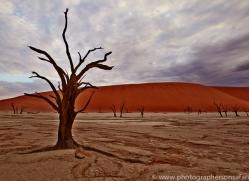 deadvlei-copyright-photographers-on-safari-com-6748