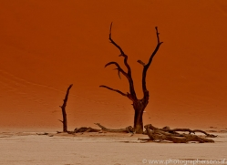 deadvlei-copyright-photographers-on-safari-com-6751