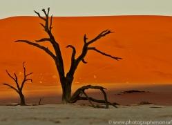 deadvlei-copyright-photographers-on-safari-com-6757