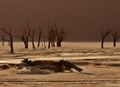 deadvlei-copyright-photographers-on-safari-com-6763