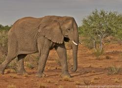 elephant-copyright-photographers-on-safari-com-6825