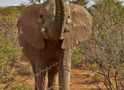 elephant-copyright-photographers-on-safari-com-6826