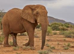 elephant-copyright-photographers-on-safari-com-6831
