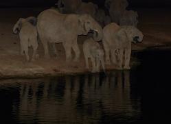elephant-copyright-photographers-on-safari-com-6832
