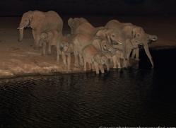 elephant-copyright-photographers-on-safari-com-6834