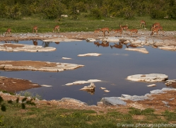 impala-copyright-photographers-on-safari-com-7035