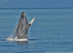 Whales 2014-11copyright-photographers-on-safari-com