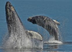 Whales 2014-12copyright-photographers-on-safari-com