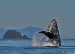 Whales 2014-1copyright-photographers-on-safari-com
