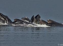 Whales 2014-25copyright-photographers-on-safari-com