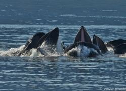 Whales 2014-28copyright-photographers-on-safari-com