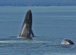 Whales 2014-6copyright-photographers-on-safari-com