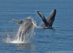 Whales 2014-8copyright-photographers-on-safari-com