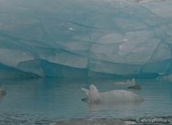 iceberg-alasaka-4701-copyright-photographers-on-safari