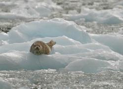 seal-inside-passage-alasaka-4769-copyright-photographers-on-safari