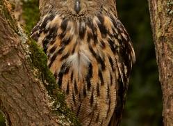 Eagle Owl 2014-12copyright-photographers-on-safari-com