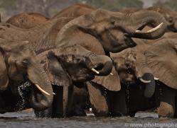 Elephant 2014-12copyright-photographers-on-safari-com