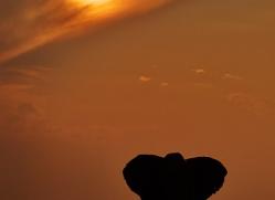Elephant 2014-21copyright-photographers-on-safari-com