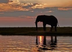 Elephant 2014-3copyright-photographers-on-safari-com