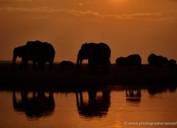 elephant-at-sunset-4423-botswana-copyright-photographers-on-safari