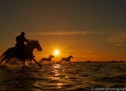 Camargue Horses 2015 -36copyright-photographers-on-safari-com