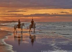 Camargue Horses 2015 -44copyright-photographers-on-safari-com