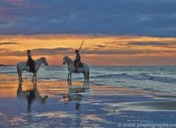 Camargue Horses 2015 -45copyright-photographers-on-safari-com
