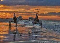 Camargue Horses 2015 -46copyright-photographers-on-safari-com