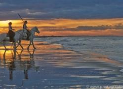 Camargue Horses 2015 -48copyright-photographers-on-safari-com