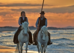 Camargue Horses 2015 -49copyright-photographers-on-safari-com