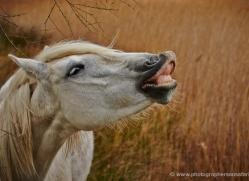 grey-heron-1039-camargue-copyright-photographers-on-safari-com