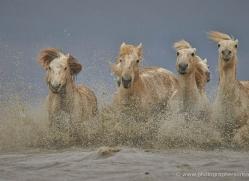 grey-heron-1040-camargue-copyright-photographers-on-safari-com