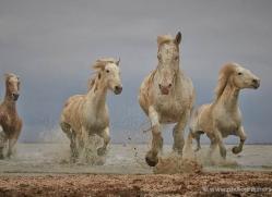 grey-heron-1041-camargue-copyright-photographers-on-safari-com