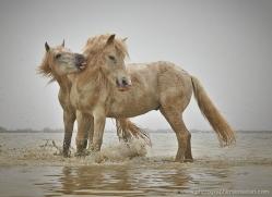 grey-heron-1062-camargue-copyright-photographers-on-safari-com