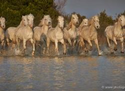 grey-heron-1064-camargue-copyright-photographers-on-safari-com