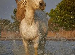 grey-heron-1068-camargue-copyright-photographers-on-safari-com