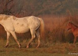 grey-heron-1084-camargue-copyright-photographers-on-safari-com