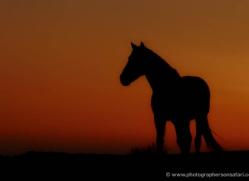 grey-heron-1085-camargue-copyright-photographers-on-safari-com