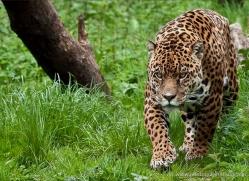 gerry-gill-5381-copyright-photographers-on-safari-com