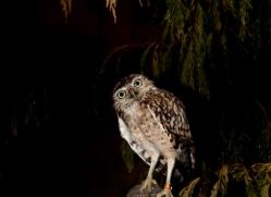 harvey-wood-5390-copyright-photographers-on-safari-com