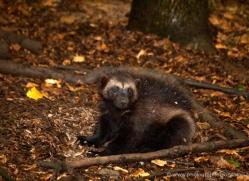 harvey-wood-5391-copyright-photographers-on-safari-com