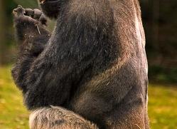 ian-cook-5395-copyright-photographers-on-safari-com