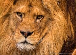 ian-cook-5397-copyright-photographers-on-safari-com