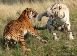 jane-storer-5400-copyright-photographers-on-safari-com