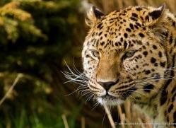 ken-weldon-5410-copyright-photographers-on-safari-com