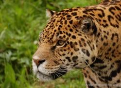 marleen-moxon-5436-copyright-photographers-on-safari-com