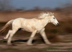 nicola-billows-5441-copyright-photographers-on-safari-com