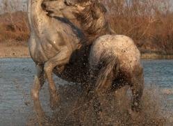 nicola-billows-5444-copyright-photographers-on-safari-com