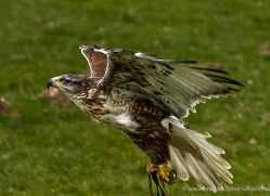 paul-gardiner-5448-copyright-photographers-on-safari-com