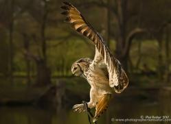paul-gardiner-5449-copyright-photographers-on-safari-com